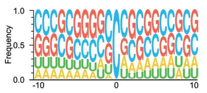 RNA甲基化位点Motif分析