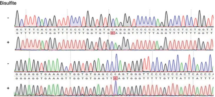 识别RNA甲基化位点