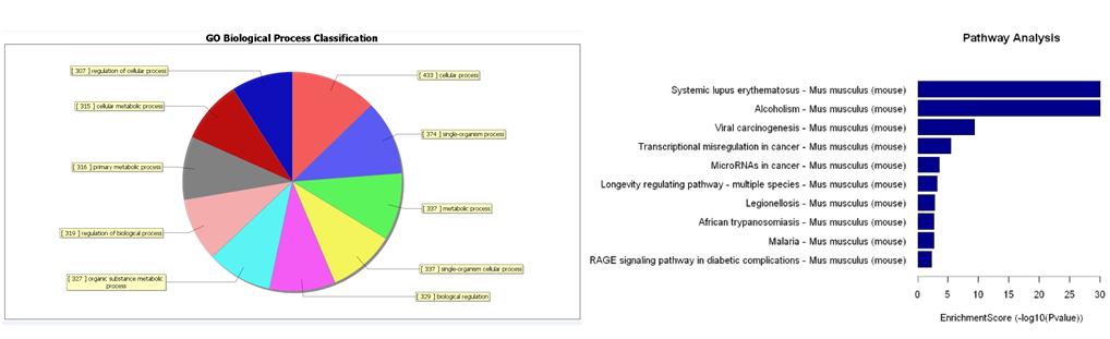 差异甲基化区的GO和KEGG信号通路分析