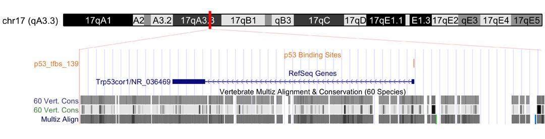 LncRNA上游转录因子分析