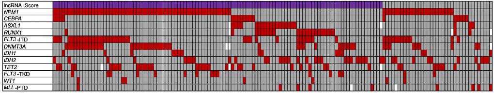 LncRNA分值与一些常见的急性骨髓性白血病点突变的联系
