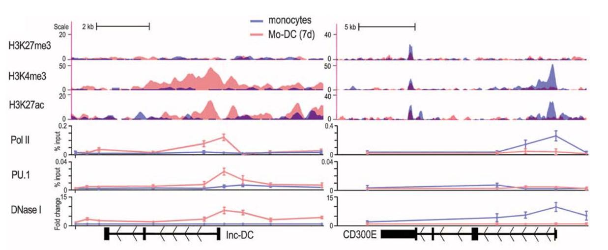 通过ChIP-Seq确定Lnc-DC基因区的组蛋白修饰情况(CD300E为对照)