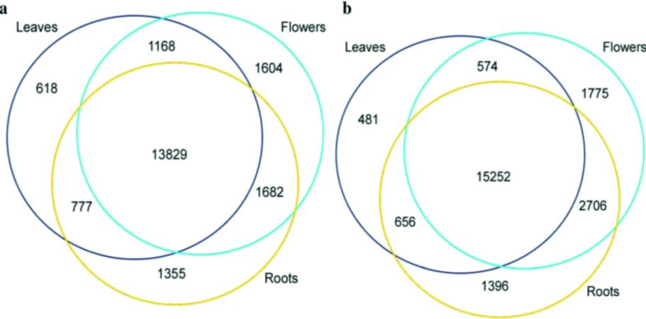 比较拟南芥花,叶,根组织中m6A RNA甲基化情况