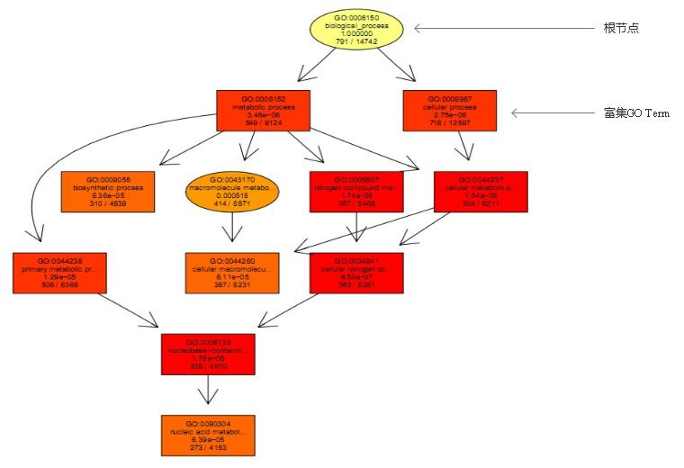 差异RNA甲基化位点的GO与信号通路分析