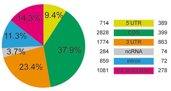 RNA甲基化位点在基因组中的分布