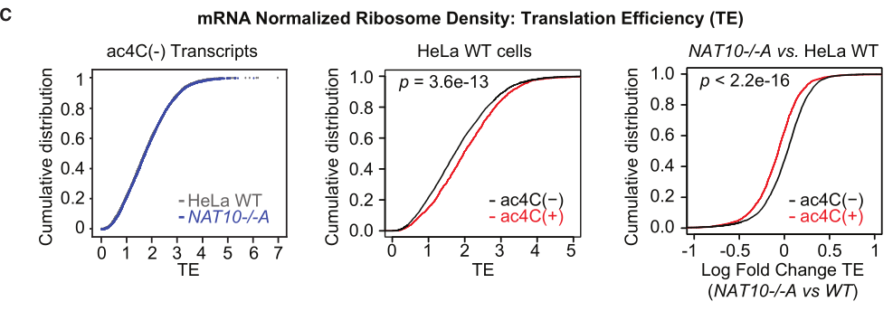 ac4C促进mRNA的翻译效率