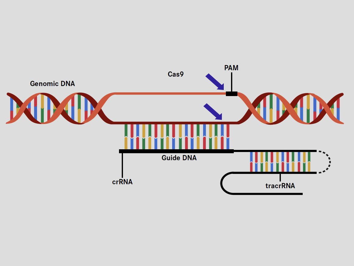 基因表达调控