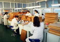 腊叶标本厂家