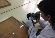 河南显微镜生物玻片