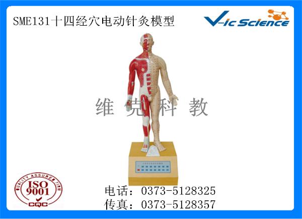 SME131十四经穴电动针灸模型