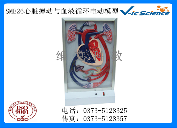 SME26心脏搏动与血液循环电动模型