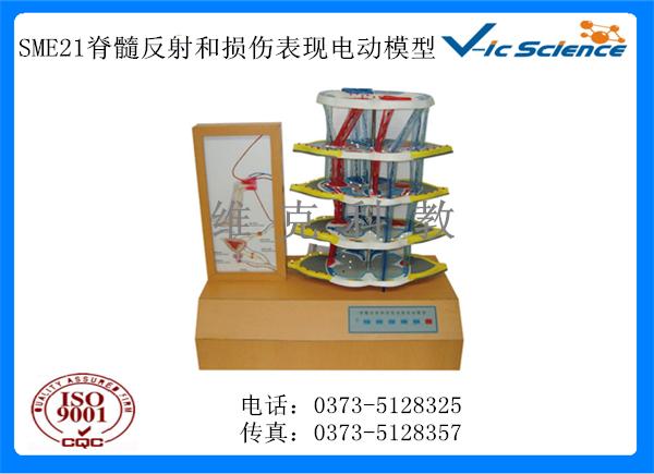 SME21脊髓反射和损伤表现电动模型