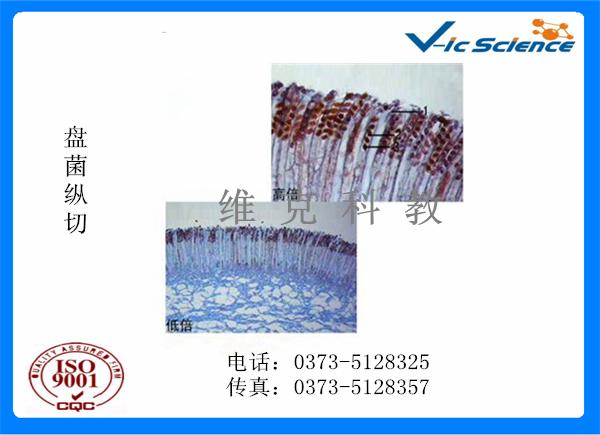 菌类植物玻片