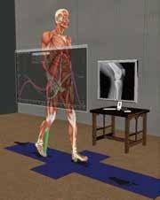 SIMM交互式骨骼肌肉建模仿真软件