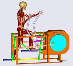 AnyBody人体建模仿真及生物力学分析系统