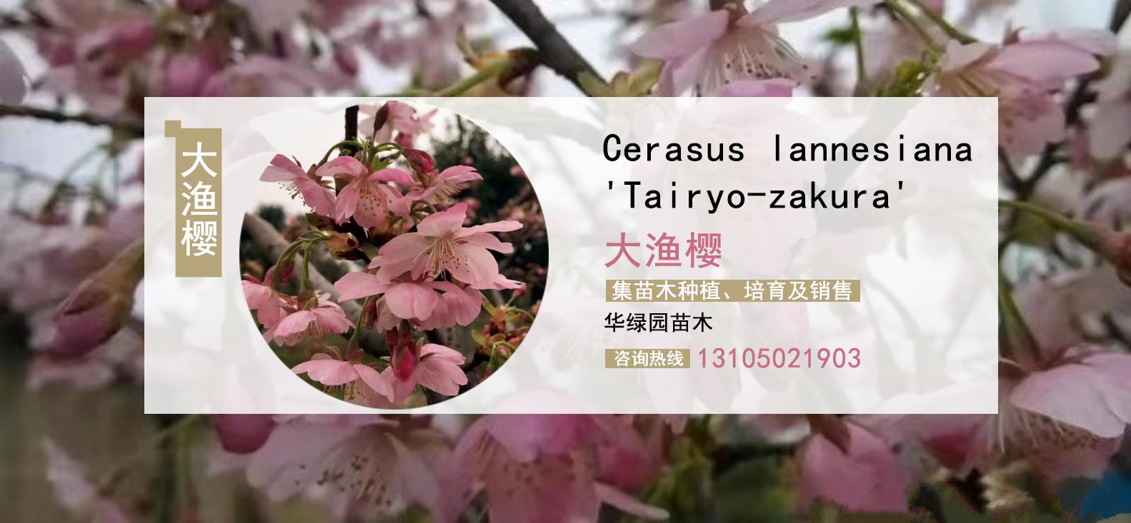 臺北華綠園苗木關于我們