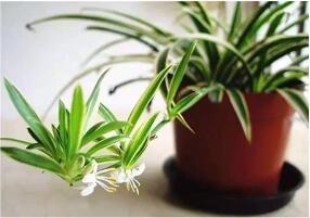除甲醛——新竹可久可爲您推舉五種除甲醛的植物