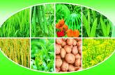 用好用对化肥 实现减量增效