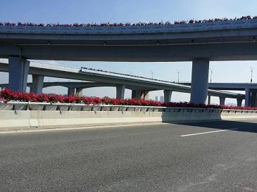后渚大桥玻璃钢高架桥花箱