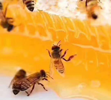 长白山农副产品分享蜂...
