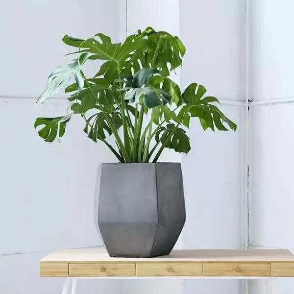 龟背竹工业风盆栽