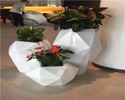 竹芋艺术组合盆栽