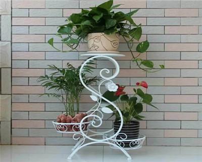 吊绿萝红掌组合盆栽