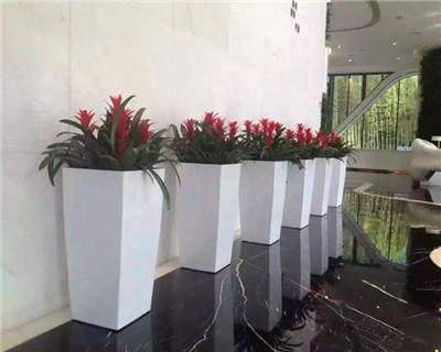 凤梨组合盆栽