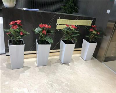 红掌组合盆栽