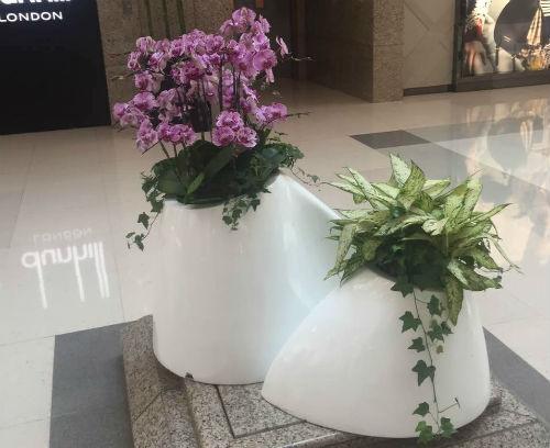开花组合艺术盆栽