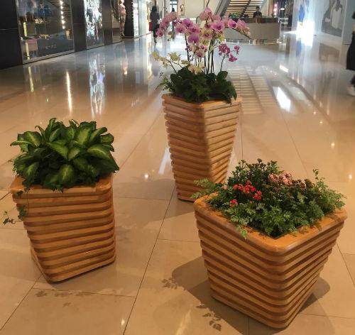 蝴蝶兰艺术组合盆栽