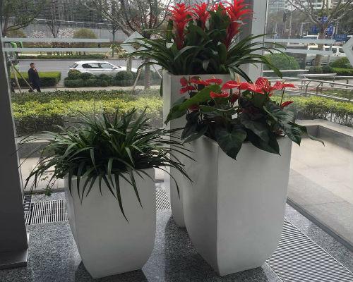 红掌凤梨龙须树组合