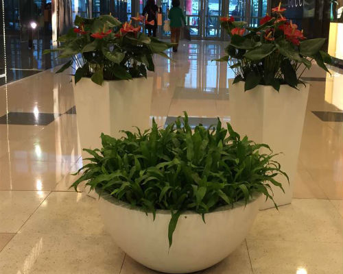 凤梨鸟巢蕨组合盆栽