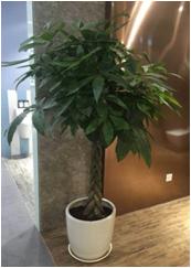上海植物租赁公司关于四季绿植养护小知识的分享
