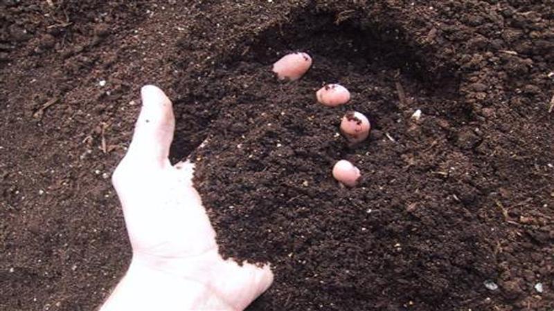有机肥料腐熟之后