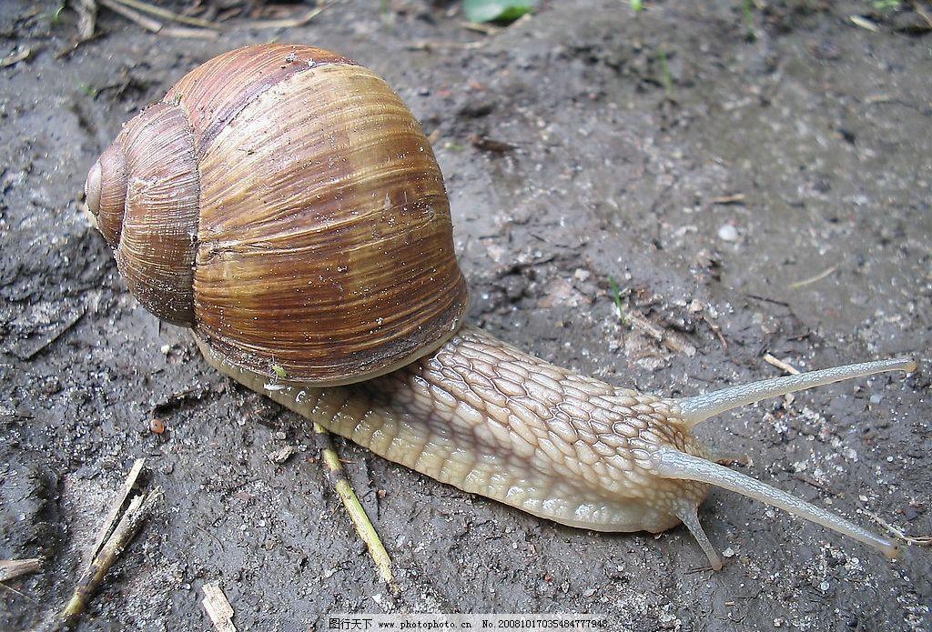 土壤污染导致蜗牛锐减