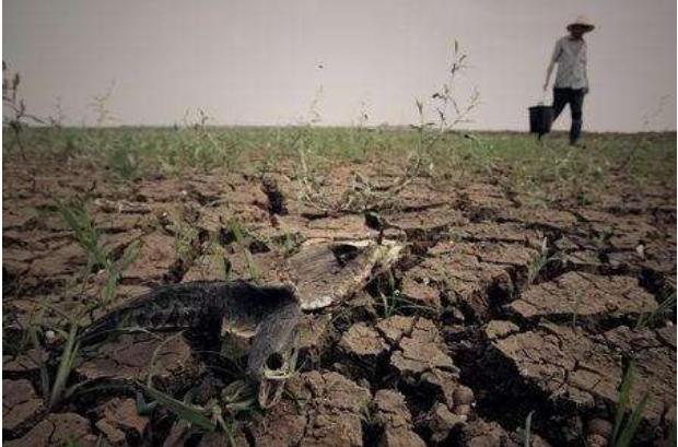 土地板结,土壤污染严重