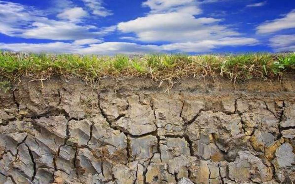土壤污染导致土地板结
