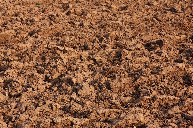 微生物肥料對于中國農業的重要性