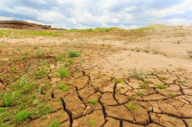 中國的農業需要微生物肥料