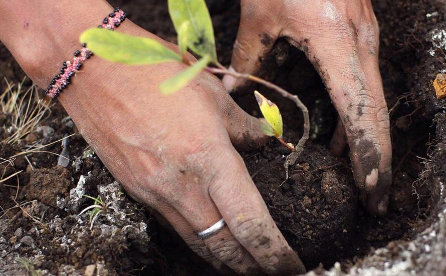 生物有機肥冬季如何施用