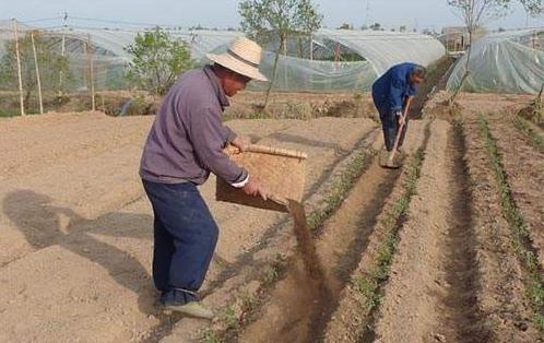 生物有機肥料5大作用