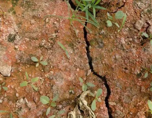 微生物肥料在土壤中起很大的作用