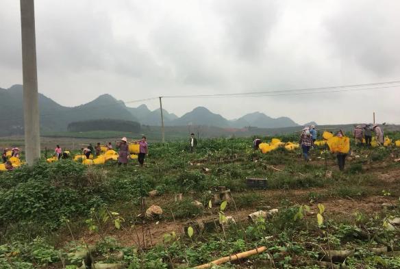 微生物肥料對于農業的重要作用