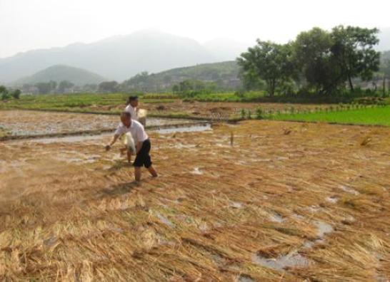 有機肥料培肥地力