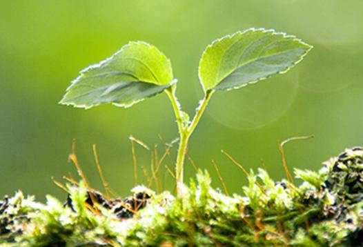 有機肥料培肥地力有很大作用