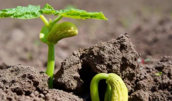 有機肥原料的重要性
