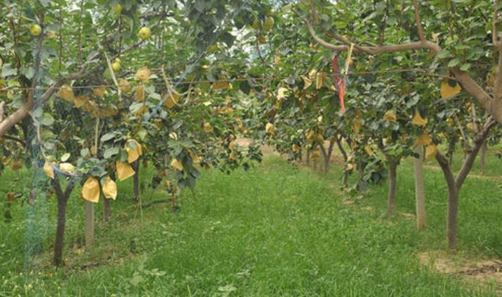 有機肥施肥技術
