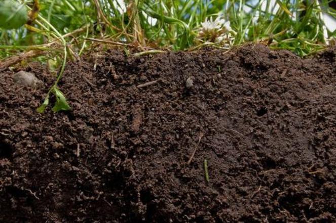 果園多施有機肥