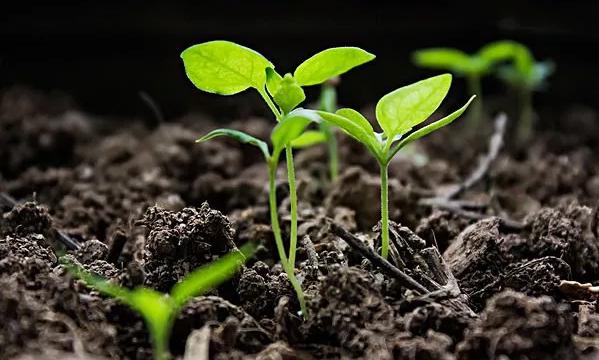 有機肥配合化肥等于絕配
